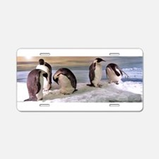 Penguins from Antarctica Ph Aluminum License Plate