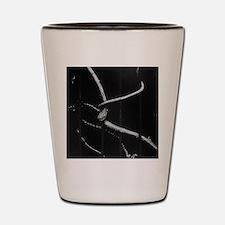 Unique 10x10 Shot Glass