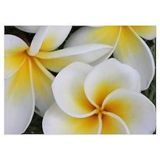 Yellow and White Magnolia Flower Bloss Invitations