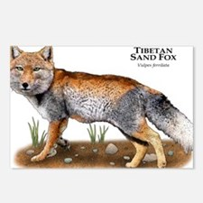 Tibetan Sand Fox Postcards (Package of 8)