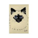 Blue Eyed Kitten Rectangle Magnet (100 pack)