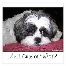 Cute Shih Tzu Dog Invitations