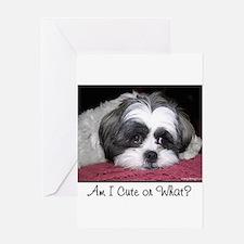 Cute Shih Tzu Dog Greeting Cards