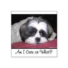 Cute Shih Tzu Dog Sticker