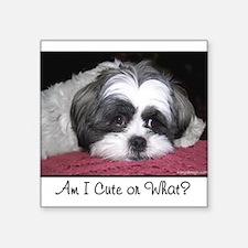 Cute Shih Tzu Dog Sticker