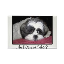 Cute Shih Tzu Dog Magnets