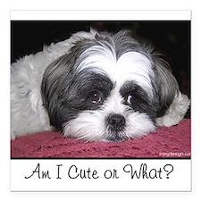 """Cute Shih Tzu Dog Square Car Magnet 3"""" x 3"""""""