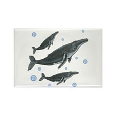 Humpback Whales Magnets