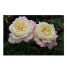 Pink and White Roses Postcards (Package of 8)