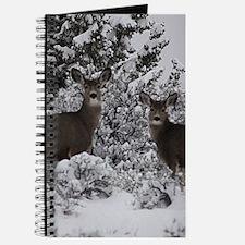 Mule Deer in the Oregon Snow Journal