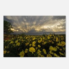 Dramatic Yellow Primrose Postcards (Package of 8)