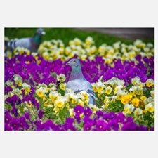 Pigeon And Pansies Wall Art