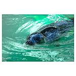 Swimming Seal Wall Art