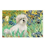 Irises / Coton Postcards (Package of 8)