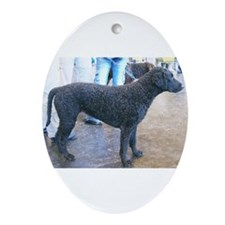 curly coated retriever full Ornament (Oval)