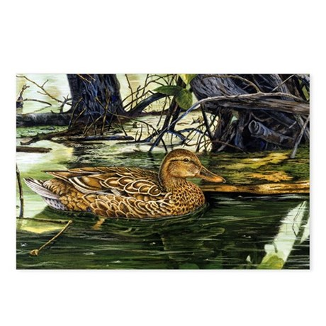 Mallard on the River Postcards (Package of 8)