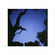 Tree branches in silhouette against bl Invitations