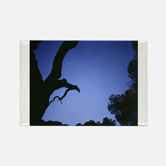 Tree branches in silhouette against blue d Magnets