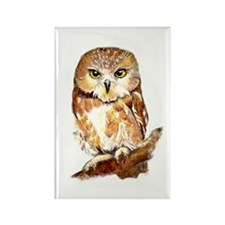Watercolor Saw Whet Cute Little Owl Magnets