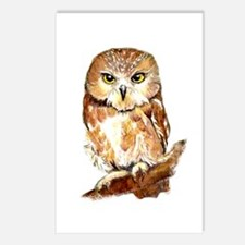 Watercolor Saw Whet Cute Postcards (package Of 8)