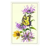 Bergamot & Butterfly Postcards (Package of 8)