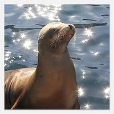 Sparkling Sea Lion Invitations