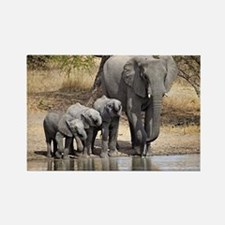Elephant mom and babies Magnets
