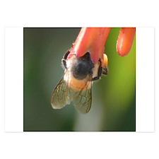 bee Invitations