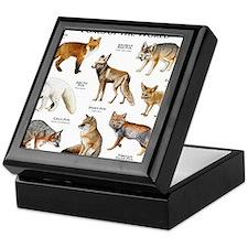 Foxes of the World Keepsake Box