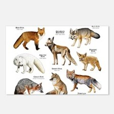 Foxes of the World Postcards (Package of 8)