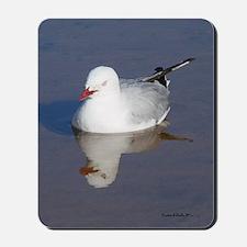 New Zealand Sea Gull Mousepad