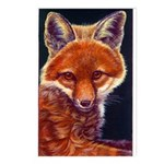Fox Cub Postcards (Package of 8)