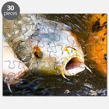 Funny Koi Puzzle