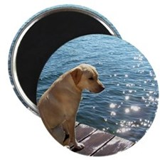 Yellow Labrador Magnets