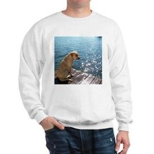 Yellow Labrador Sweatshirt