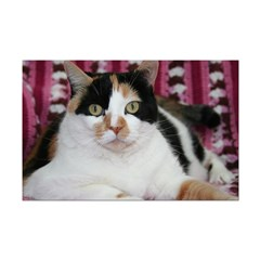Calico Cat Posters
