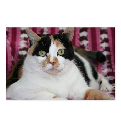 Calico Cat Postcards (Package of 8)