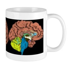 Three Views Of The Brain Mugs