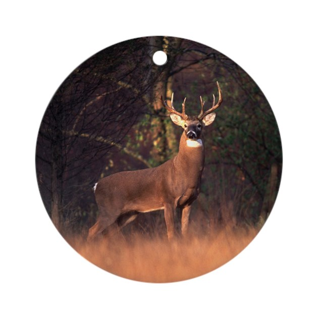 Whitetail Deer Ornament Round By Dcrimages