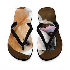 Beagle Dog Flip Flops