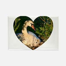 Swan Love Rectangle Magnet