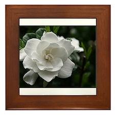 Gardenia Bloom Framed Tile