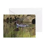 Merganser Family Greeting Cards