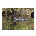 Merganser Family Postcards (package Of 8)