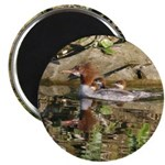 Merganser Family Magnets
