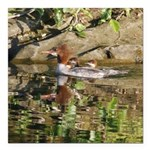 Merganser Family Square Car Magnet 3