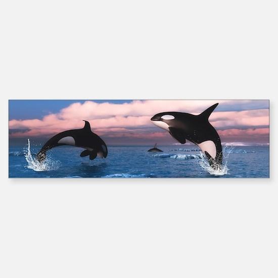 Killer Whales In The Arctic Ocean Bumper Bumper Bumper Sticker