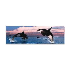 Killer Whales In The Arctic Ocean Car Magnet 10 x