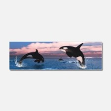 Killer Whales In The Arctic Ocean Car Magnet 10 x