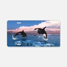 Killer Whales In The Arctic Ocean Aluminum License